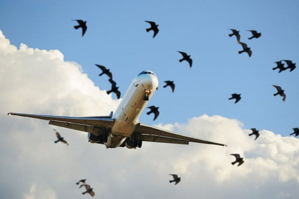 "No right to compensation after ""Bird Strike"""