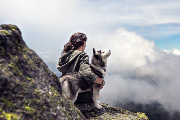 Jouw huisdier mee op reis